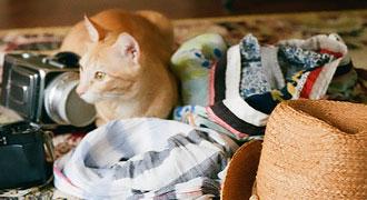 Affaires en désordre sur le sol en compagnie d'un chat.