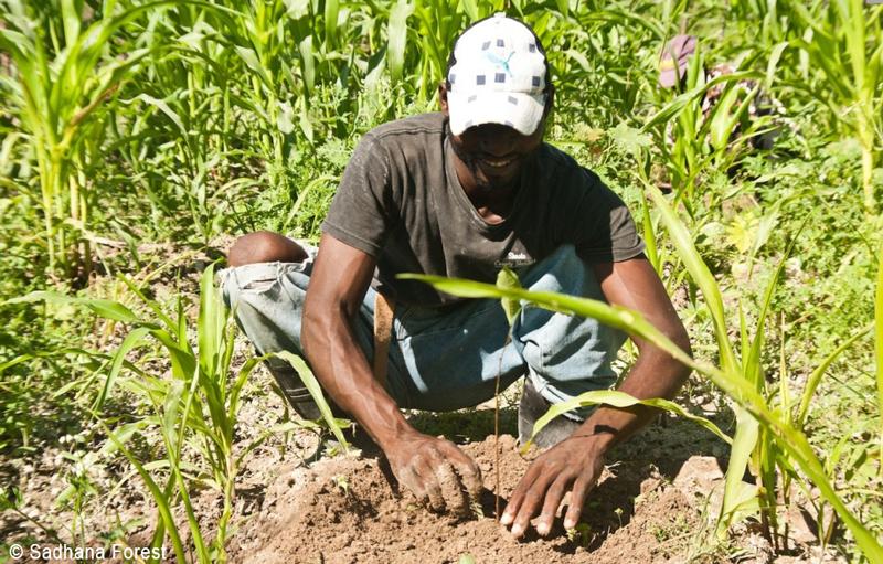 Plantation d'un arbre en Haïti